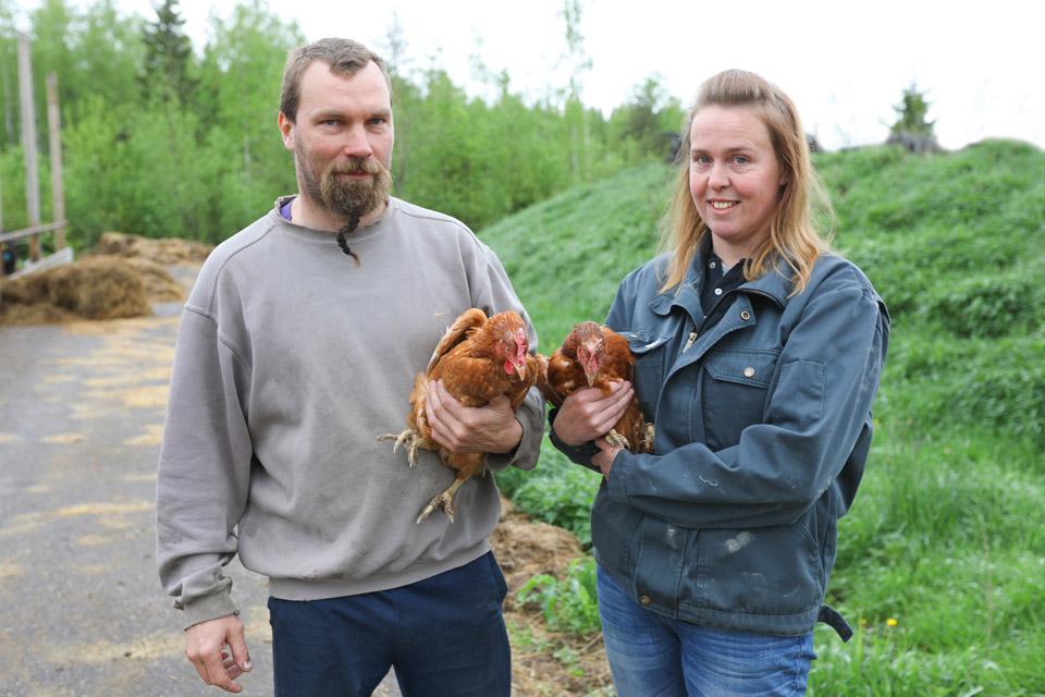 Ekologiska lokala ägg